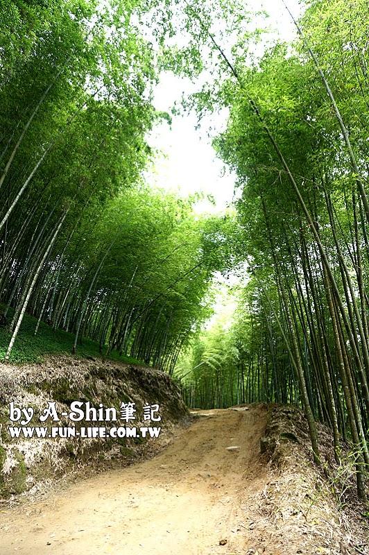 南投竹山遊-竹山天梯-太極峽谷-青龍瀑布54