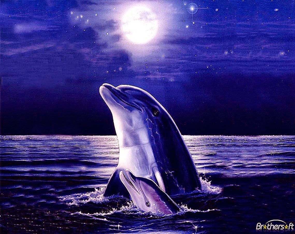3d Dolphin Wallpaper For Windows 7 3d Desktop Wallpaper Dolphins Video Search Engine At