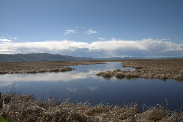 Marshlands of the Wildlife Refuge.jpg