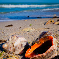 seashells close-up with the Black Sea in the background | Fuji X10