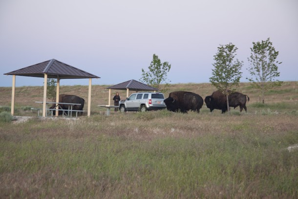 Bison Surrounding Camper on Antelope Island.jpg