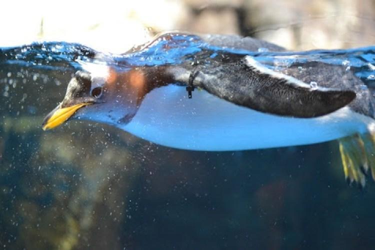 Living Planet Aquarium Giveaway Utah Closed