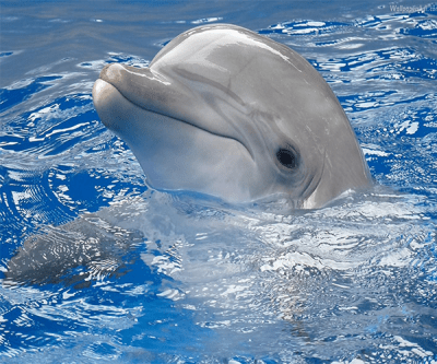 Dolphin Live Wallpaper - Android Apps on Google Play
