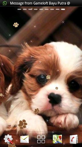 Download Puppy Dog live wallpaper Google Play softwares - aWwOLrI6ltGU | mobile9