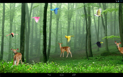 Rain Forest Live Wallpaper - Android Apps on Google Play
