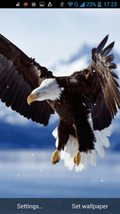 Eagle Live Wallpaper - Android Apps on Google Play