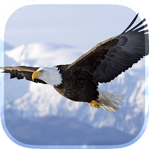 Eagle Live Wallpaper - Android Apps on Google Play