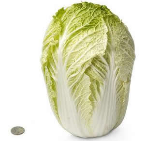 28 chinese cabbage