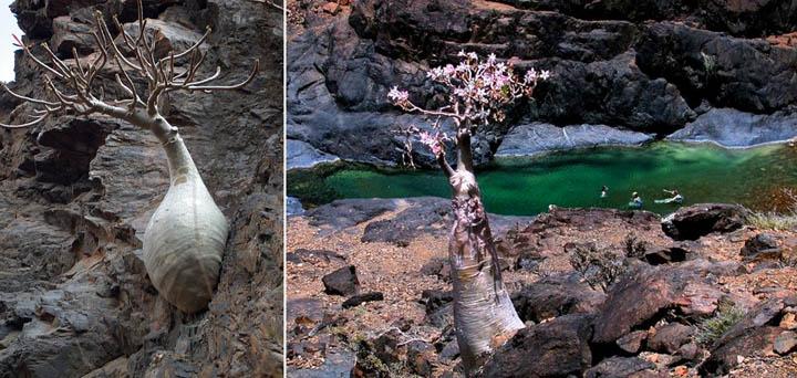 صور اشجار منوعة 2016 ، مجموعة اشجار روعة 2016 ، تشكيلة اشجار جديدة 345654ytrhfhyj.jpg
