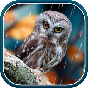 Water Falling Leaves Live Wallpaper Apk App Autumn Live Wallpaper Apk For Windows Phone Android