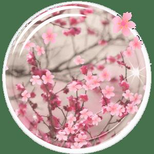 Sakura Falling Live Wallpaper Downloads Download Sakura Live Wallpaper Apk On Pc Download