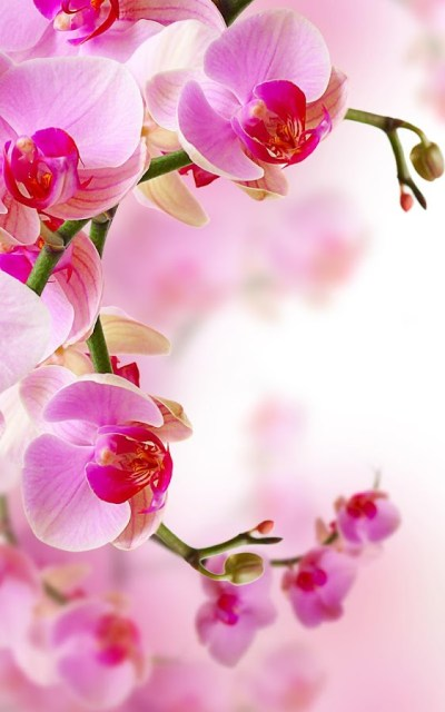 Orchid Live Wallpaper - Android Apps on Google Play