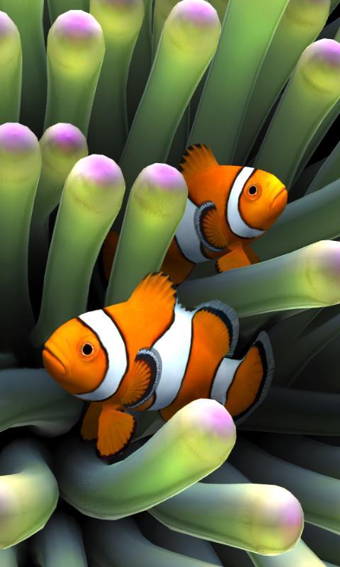 Clown Fish Wallpaper Iphone 6 Plus Sim Aquarium Apps Para Android No Google Play