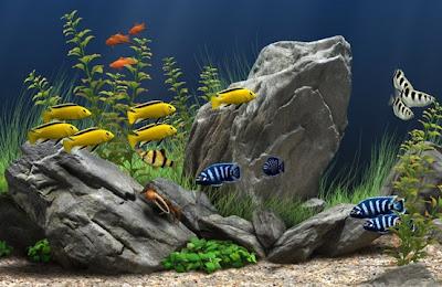 10 Steps To Set Up A Tropical Fresh Water Fish Aquarium