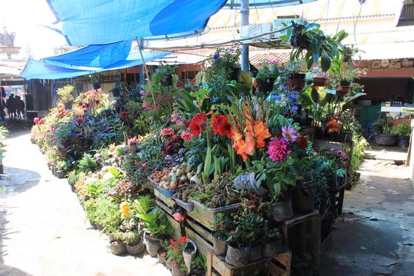 Bunga di Pasar Berastagi