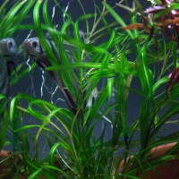 betta fish tanks with live plants - Biorb fish tanks and water plants