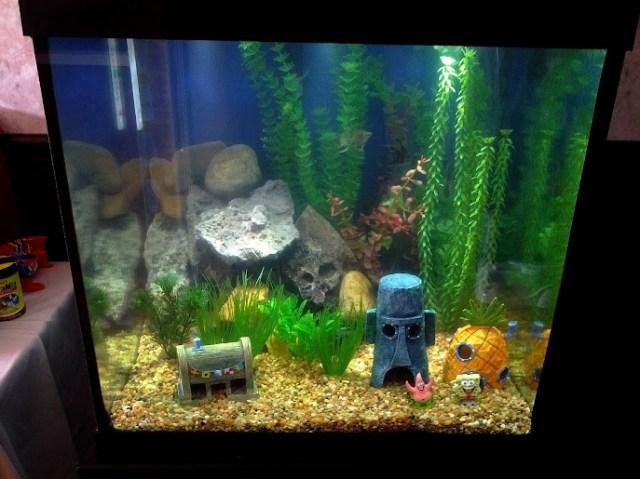 Thread: 27 Gallon Cube fish cycle journal