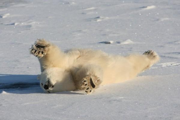 Eines meiner Lieblingsfotos der Bären