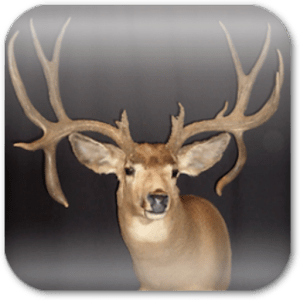 New Version of Deer Hunting Live Wallpaper apk Free | oranfizz