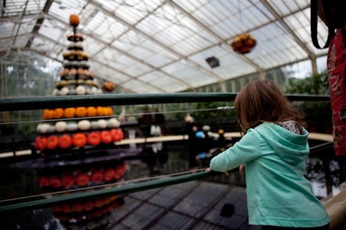 Kew Gardens Pumpkins 5
