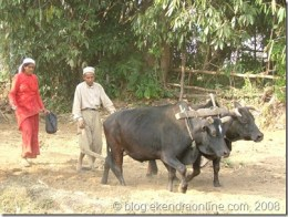 Traditional farming in Nepal