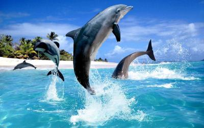 Dolphin HD Live Wallpaper - Android Apps on Google Play