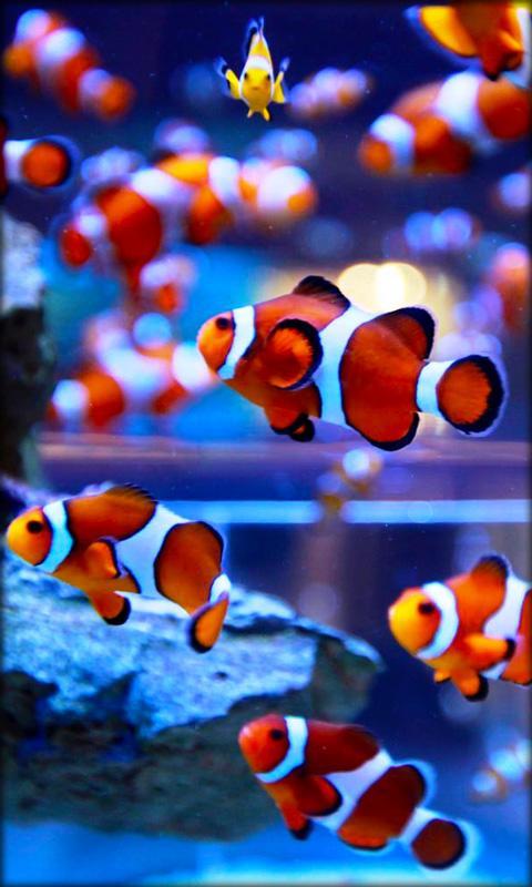 Clown Fish Wallpaper Iphone 6 Plus Akvaryum Canlı Duvar Kağıdı Google Play De Android