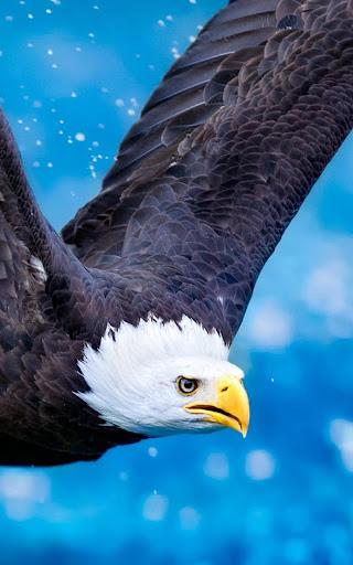 Download Eagle Live Wallpaper for PC