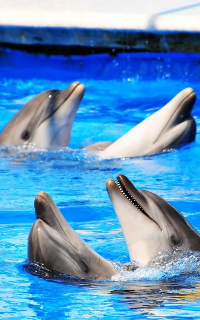 Dolphin HD Live Wallpaper - Android Apps on Google Play