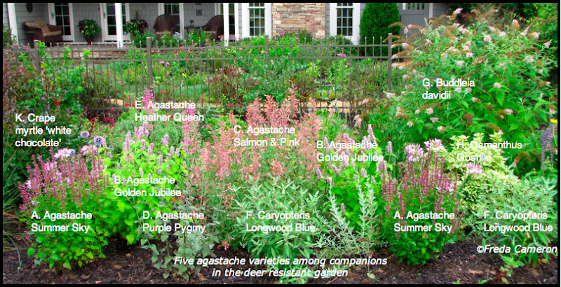 Defining Your Home, Garden and Travel Agastache Garden Plan - drought tolerant garden designs