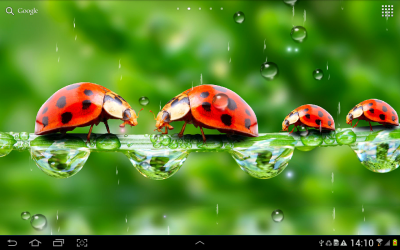 Rain Live Wallpaper - Android Apps on Google Play