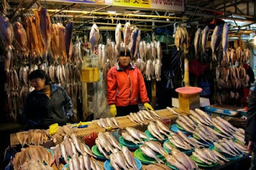 jalgachi fish market busan, korea's biggest fish market, busan jalgachi fish market