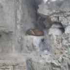 San Marcos Zoo 2011