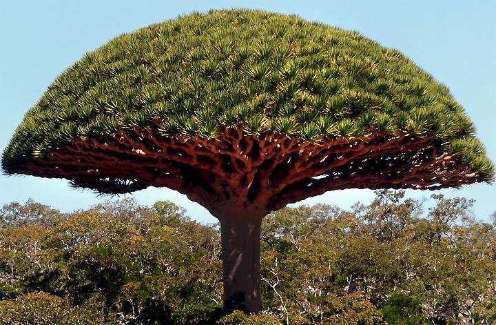 صور اشجار منوعة 2016 ، مجموعة اشجار روعة 2016 ، تشكيلة اشجار جديدة 3546546tertgfhhgj.jpg