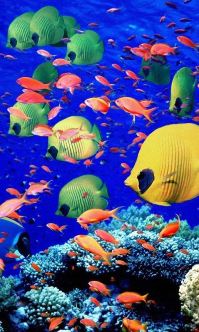 Aquarium Live Wallpapers – Android-Apps auf Google Play