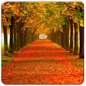 Falling Leaves Live Wallpaper For Android App Autumn Live Wallpapers Apk For Kindle Fire Download