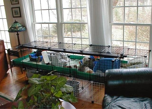 Critter Corner Guinea Pig Housing