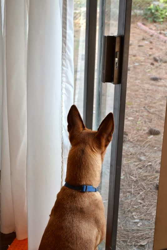 Charlie looking out of the sliding glass door