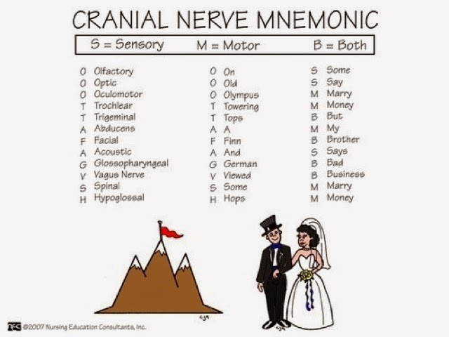 Nursing Students Only! Those darn cranial nerves!!!