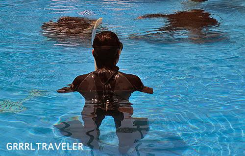 padi scuba diving lessons, getting scuba diving certified in thailand ko tao