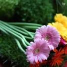 atelier-floral-02