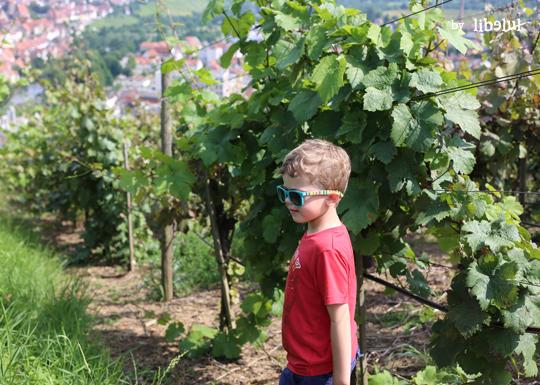 wine-03-by-libelul