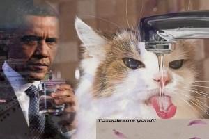 obama cat owners brainwash