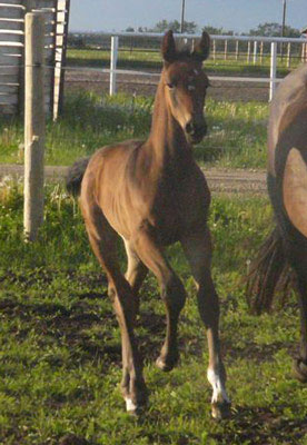 Lovestory as a foal