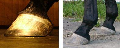 hoof-barefoot