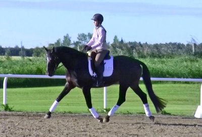 Under saddle as a 5-yr-old
