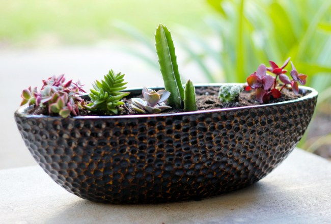 succulents-bronze-pot