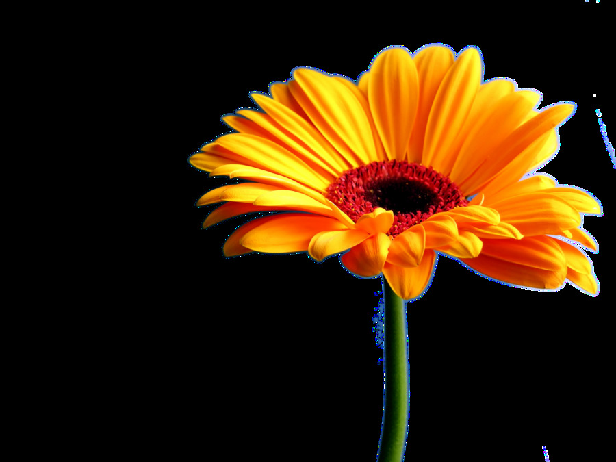 Download seaasparagus yellow flower scarf, flower scarf, hand