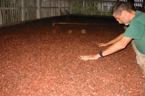 Claudio Corallo and his beloved cacao beans