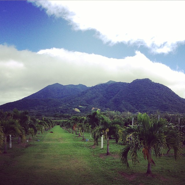 Facing Liamuiga #mountain #StKitts #inspiration